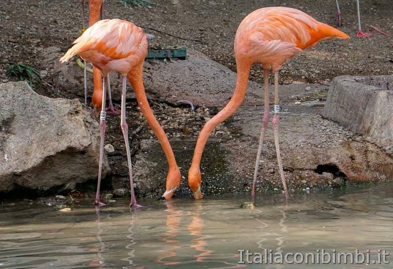 Parco Natura Viva - fenicotteri rosa