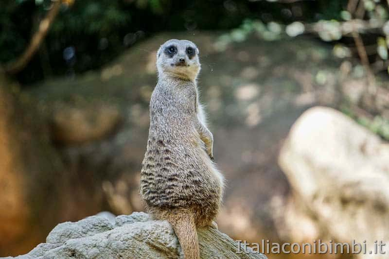 Parco Natura Viva - lemure