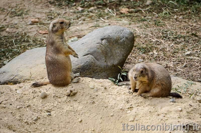 Parco Natura Viva - marmotte