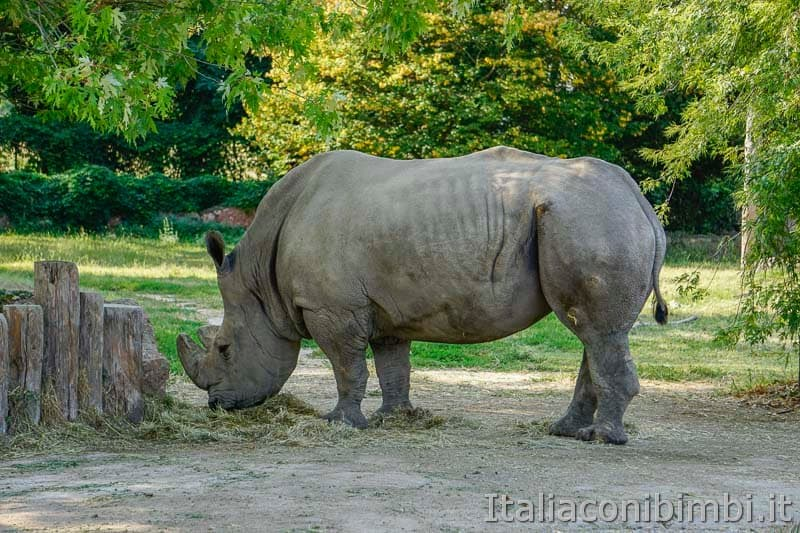 Parco Natura Viva - rinoceronte