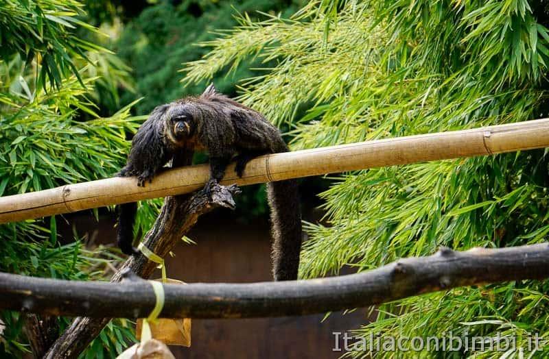 Parco Natura Viva - scimmia