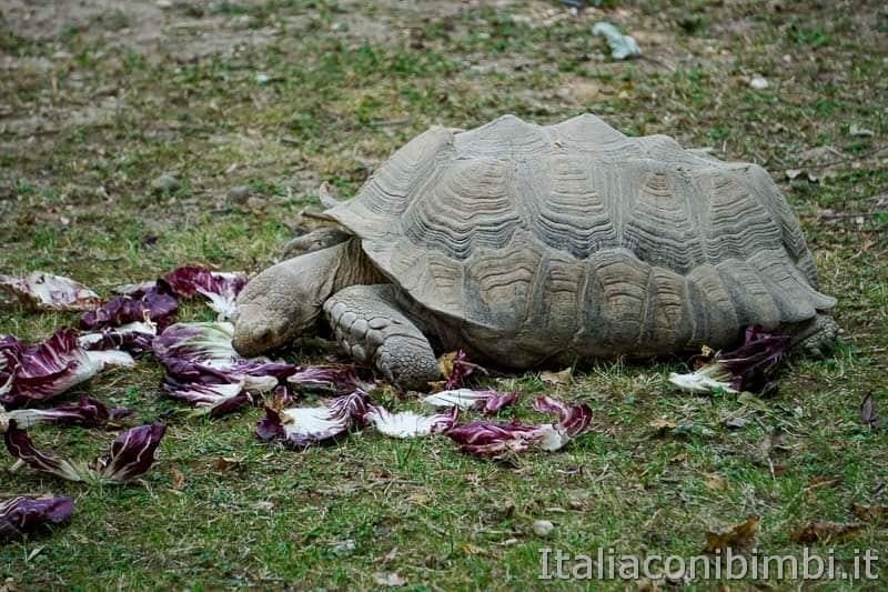 Parco Natura Viva - tartaruga