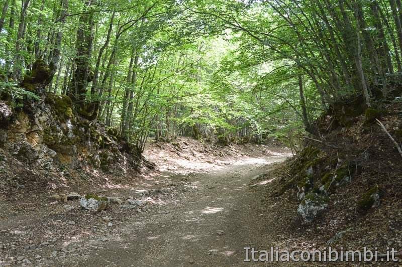 Sentiero Rifugio Cicerana - Abruzzo - nel bosco
