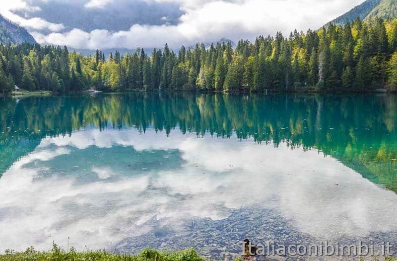 Laghi di Fusine - lago inferiore - anatra