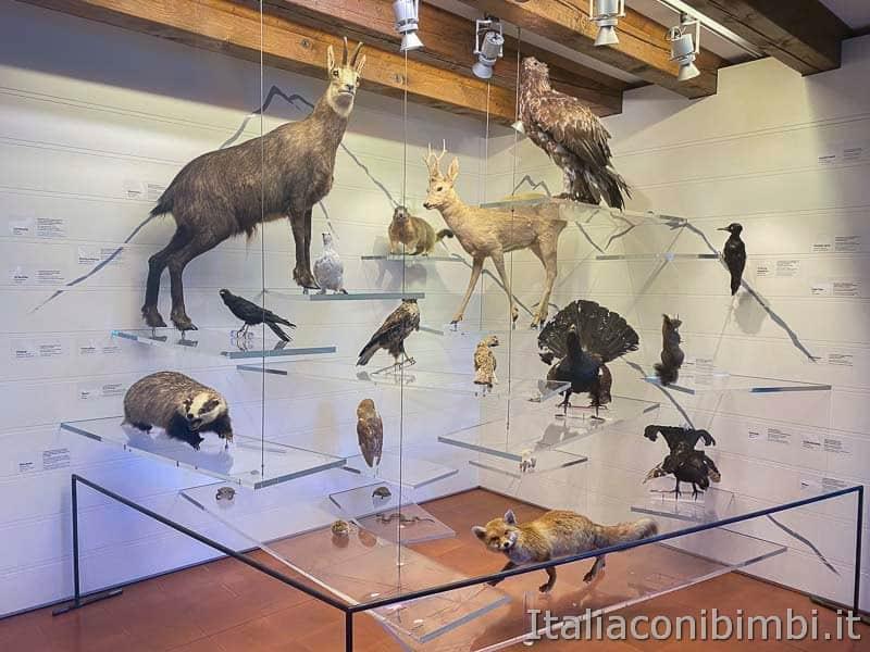 Malcesine - museo di storia naturale animali
