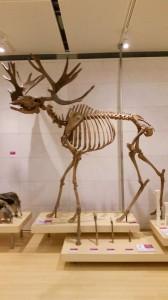 muse scheletri Muse museo della scienza di Trento
