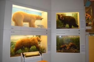 museo uomo e natura monaco 2
